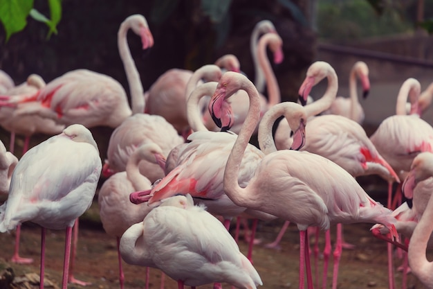 Flamingo in peru