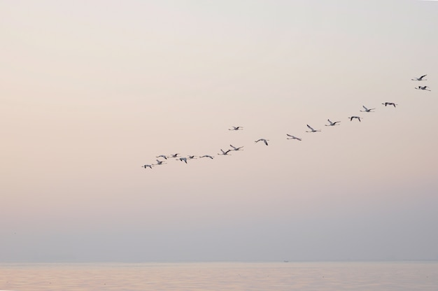 Flamingoes in flight birds in the sky
