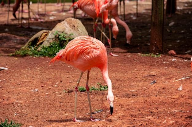 Flamingos closeup, wonderful colors, beautiful birds.