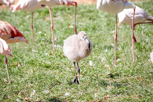 Кормление фламинго на озере