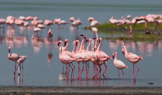 反射のある湖のフラミンゴ