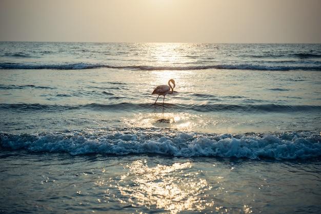 夕日の光線で海のフラミンゴ。海に沈む夕日の孤独なフラミンゴ。大きな鳥が水の中を歩きます。