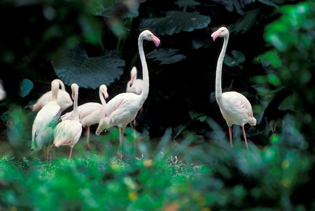 Flamingos in tropical environment