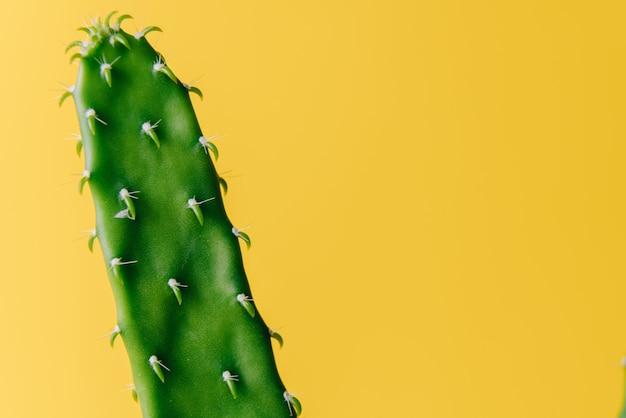 黄色の背景にフラットで長い緑のサボテン。