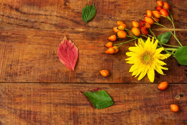Плоский состав с ягодами шиповника, листьями и подсолнечником на деревянном столе. уютная осень или концепция зимнего отдыха. место для текста, рамки, вида сверху, пространства для копирования, макета