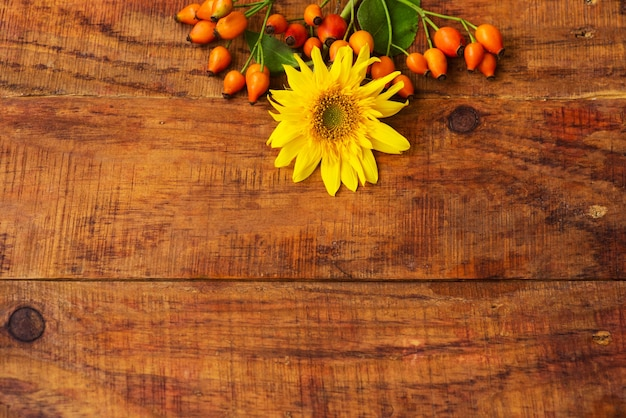 Flat composition with rosehips berries and sunflower on a wooden table. cozy autumn or the concept of winter rest