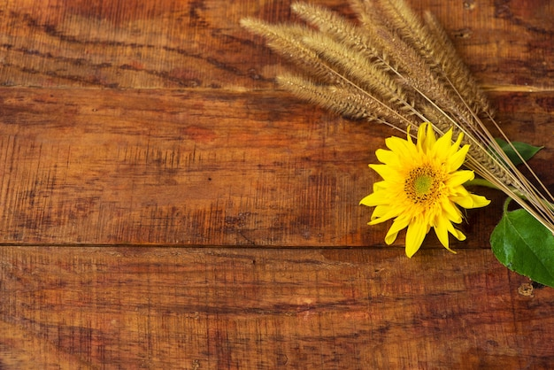 Flat composition with wheat spikelets and sunflower on a wooden table. cozy autumn or the concept of winter rest. place for text, frame, top view, copy space, layout