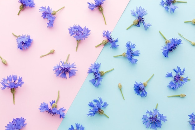 Flat lay arrangement of cornflowers