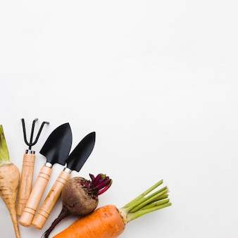 Flat lay arrangement of different vegetables and gardening tools