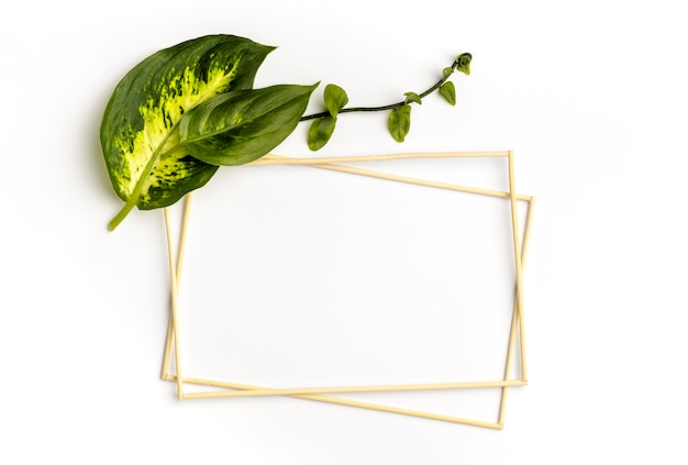 Flat lay arrangement of green leaves with empty frames