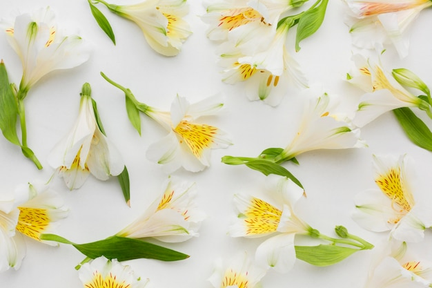 Flat lay arrangement of white alstroemeria