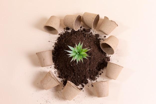 Плоская композиция с маленьким растением