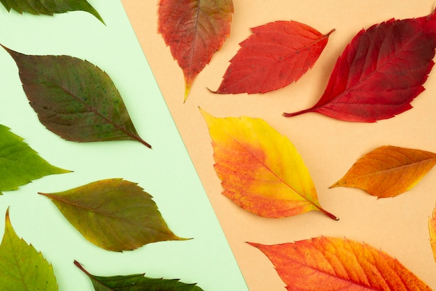 Flat lay of assortment of colored autumn leaves