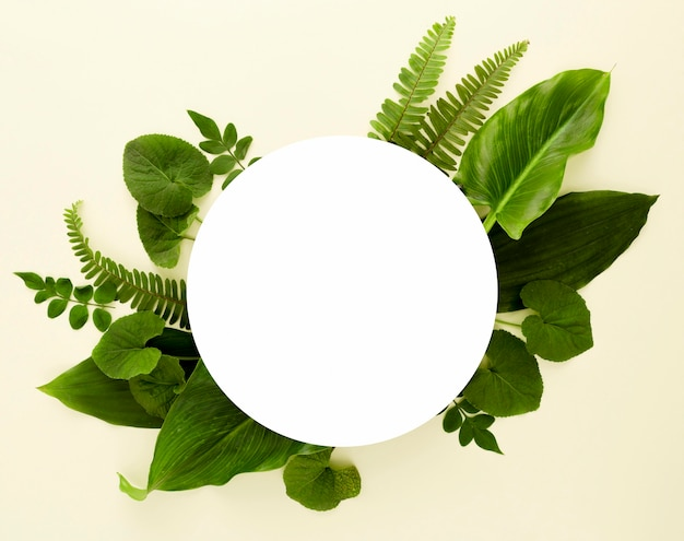 Flat lay of assortment of leaves with copy space