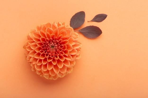 Плоский ассортимент цветов