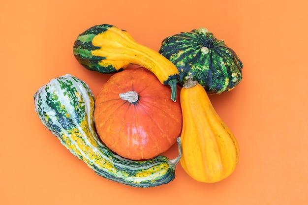 주황색 배경에 장식용 호박의 평평한 가을 구성