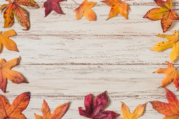 Flat  lay autumn leaves frame