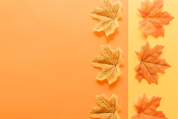 Flat lay of autumn leaves on multicolored surface