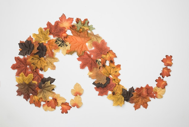 Flat lay of autumn leaves placed in abstract pattern