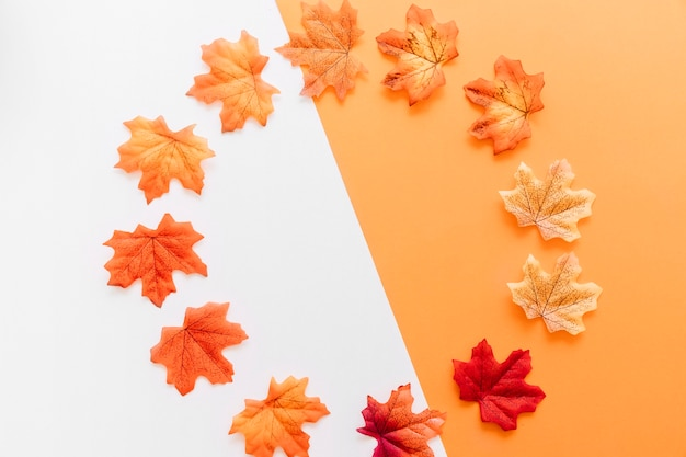 Flat lay of autumn leaves placed around boundary