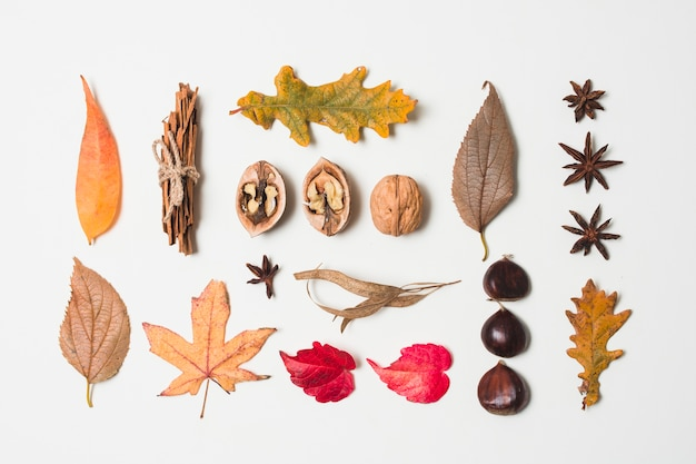 Flat lay autumn leaves variety