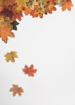 Flat lay of autumn maple leaves falling down
