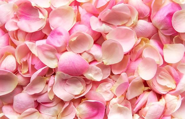 플랫 레이. 핑크 장미 꽃잎의 배경입니다.