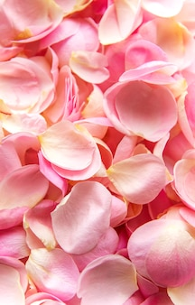 Flat lay. background of petals from pink roses.
