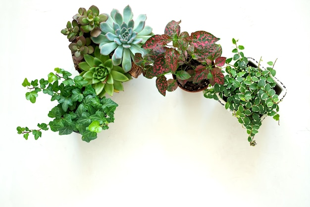 Flat lay banner copy space frame of trending collection of various indoor plants and succulents white background