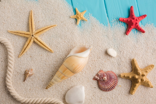 Flat lay beach concept with seashells