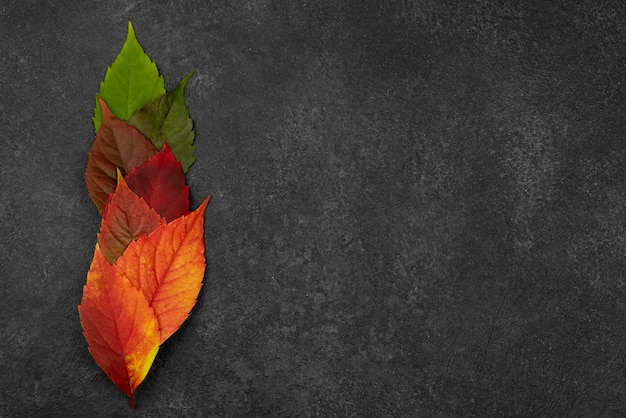 Flat lay of beautiful autumn leaves with copy space