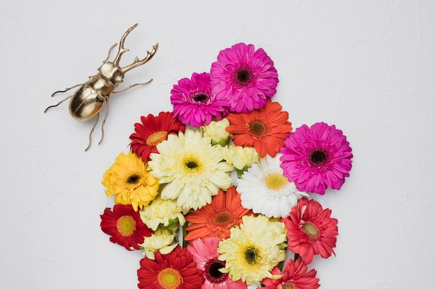 Flat lay of beautiful flowers