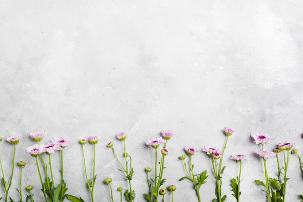 Flat lay of beautiful spring daisies with copy space