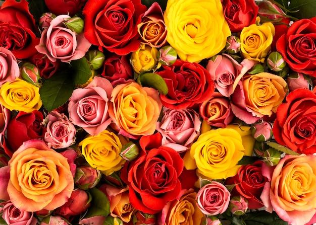 Disposizione piatta di fiori colorati splendidamente sbocciati