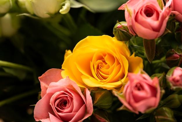 Disposizione piatta di fiori di rosa colorati splendidamente sbocciati