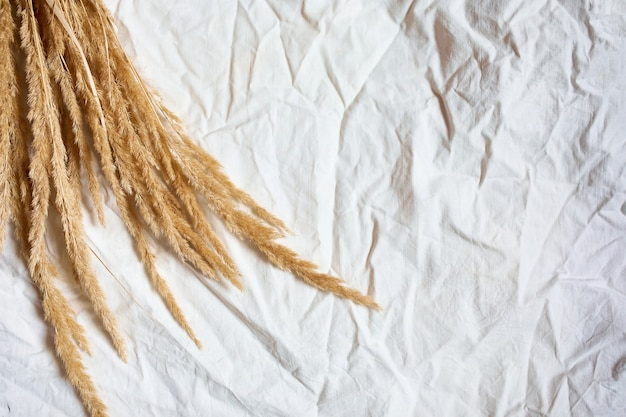 Flat lay of beige reeds pampas grass on the white textile linen table cloth