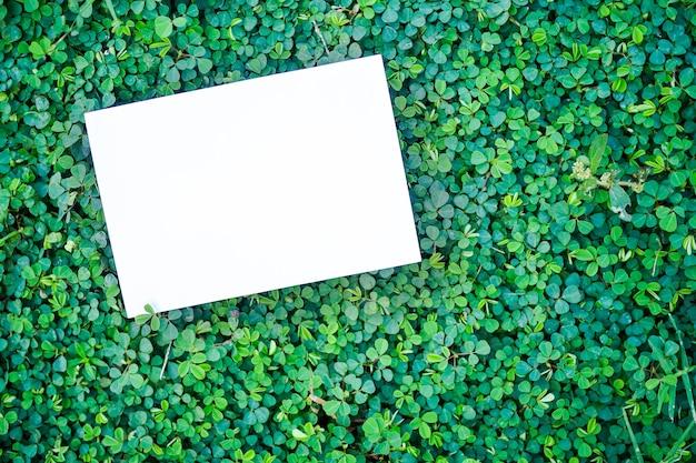 평면 누워 빈 백서 복사 공간이 녹색 잎에 조롱