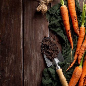 Flat lay of carrots with garden tool