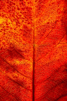Flat lay close-up of autumn leaf