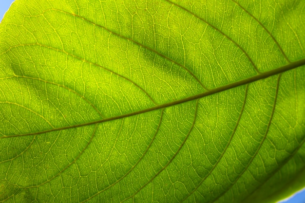 Flat lay close-up of green leaf