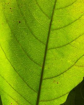 Плоский лежал крупным планом зеленого листа