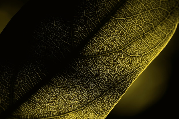 Плоская планировка крупным планом светящегося листа