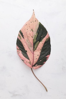 Flat lay of colored autumn leaf
