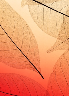 Flat lay of colored transparent leaf texture
