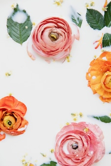 우유 목욕에 평평한 누워 다채로운 미나리 아재비 꽃