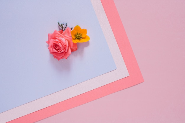 Flat lay colorful flowers composition