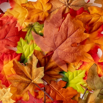 Flat lay colourful dry leaves