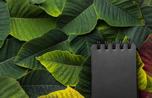 Flat lay composition of leaves with black notepad