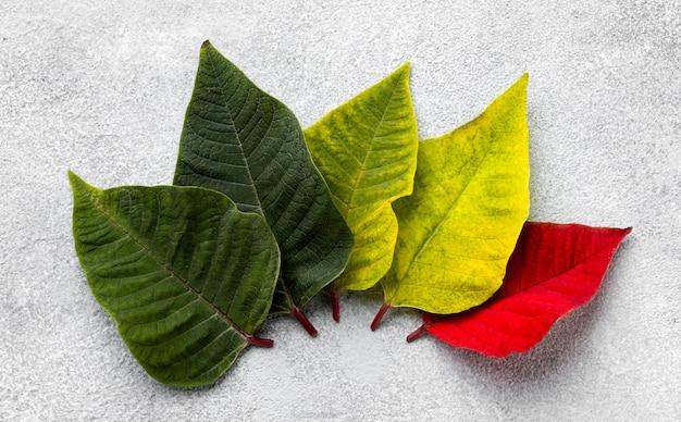 カラフルな葉のフラットレイ構成