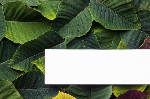 Плоская композиция из зеленых листьев с белой картой